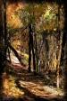 Shenandoah Colors