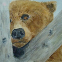 beary-sad